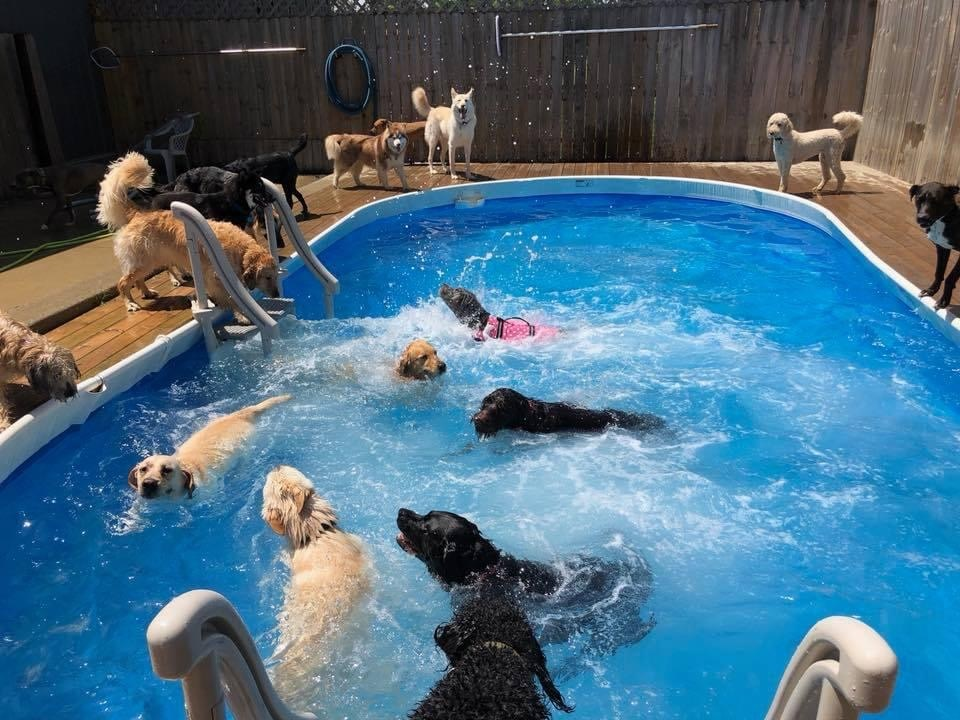 Dog Daycare Grand Ledge MI